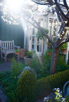 Fina bilder på Christel Qvants lilla radhusträdgård!