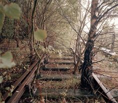 Overgrown train tracks have such a strange sense of romance that I kind of want to find some and follow them wherever they go.