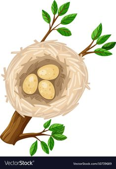 Three eggs in bird nest vector image on VectorStock Adobe Illustrator, Vector Free, Nest, Eggs, Pdf, Graphic Design, Bird, Illustration, Artwork