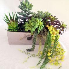 Sukulenty w srebrnej donicy 1  nr. 160 Cactus, Plants, Atelier, Plant, Planets