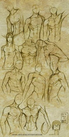 Male anatomy drawing x