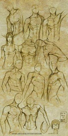 Male anatomy drawing x