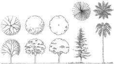 Landscape Architecture Tree Drawings Amazing 35579