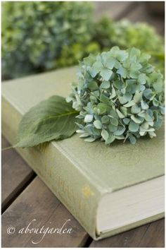 hydrangea and book