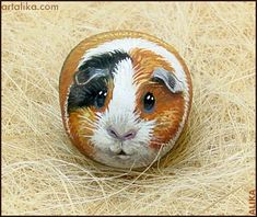 Hand painted rock ( stone)/ Guinea pig