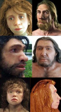 The Neanderthals are very closely related to modern humans, differing in DNA by only 0.3%, which, however, is twice that of the widest DNA gap found among contemporary humans.