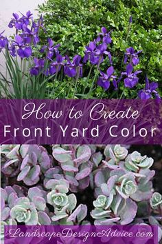 Creative Front Yard Landscaping ideas Boxwood, iris, sedum Find out how to create beautiful color in your front yard, back yard or wherever you like! Or let me help you! Both of these plants are extremely low maintenance as are many others. Low Maintenance Landscaping, Low Maintenance Garden, Front Yard Landscaping, Backyard Landscaping, Front Yard Plants, Natural Landscaping, Landscaping Images, Landscaping Software, Vegetable Garden
