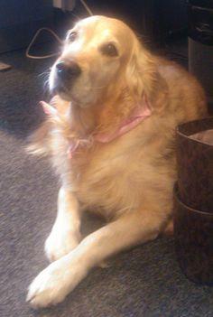 Aika ajoin toimistollamme vierailee työntekijöidemme lemmikkejä. Kuvassa valloittava Luna. Dogs, Animals, Animales, Animaux, Doggies, Animais, Dog, Animal