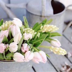 Regram @jannelford great photo, thank you! #freddiesflowers #tulips #hyacinth #winterwarmer