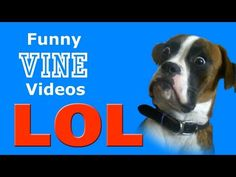 LOL ∙ Funny Animals Vine Compilations ∙ December 2014 ∙ HD 720p