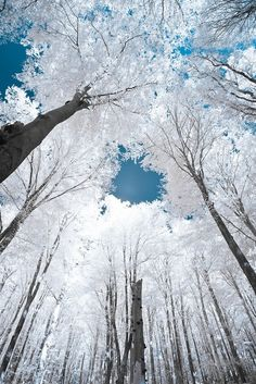 Brianna Pasbrig: The contrast of the white frozen trees on the bright blue sky creates emphasis on the circle of skyline open. Also the brown lines of the tree trunks draws your eye upward to the little bit of blue sky showing.