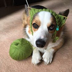 """""""Bullshit. You did not finish the scarf."""" 