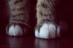 Kitty paws.  Love them kitty paws!!!!