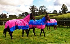 KP Rugs English Horses, Horse Rugs, Horse Accessories, Horse Tack, Equestrian, Blankets, Iphone, Funny, Cute