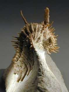 Russian Trilobite Hoplolichas plautini