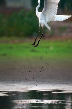 """""""Missed"""" Nikon D7100 . #photography #nikon_d7100 #missed #missed_shots #birds_photpgraphy"""