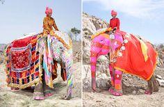 Painted Elephants – The colorful elephants of the Jaipur Elephant ...