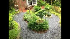 Video: How to Xeriscape a Yard With No Grass
