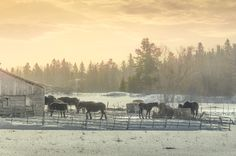 Country Scene by Lee Bodson on Country Scenes, Moose Art, Places To Visit, Animals, Animales, Animaux, Animal, Animais, Dieren