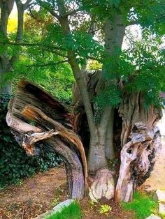 What A Wonderful World, Beautiful World, Beautiful Things, Photo Images, Forest Garden, Nature Tree, Tree Stump, Don't Give Up, Tree Art