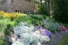 http://www.gardenia-helsinki.fi/images/kasvikuvia/Ulkokasvit/Rinne5.JPG