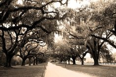 Want to go to Boone Hall Plantation...Plantations are gorgeous.