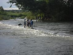 """A """"walk"""" on the Zambezi river. Mindful of sudden water surges! Secondary School, Teaching English, Mindful, African, River, Beach, Outdoor, Upper Elementary, Outdoors"""