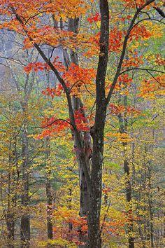 ✯ Flaming Fall Foliage