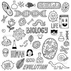 Science Icons Hand Drawn - Handdrawn biology inspired images The background is white All 40 Doodle Drawings, Doodle Art, Doodle Frames, Biology Drawing, Biology Art, Science Doodles, Sketch Notes, Free Vector Art, Vector Hand