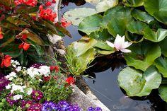 Pond by TalyaPhoto on @creativemarket