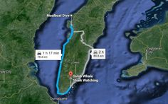 How To Get To Oslob Whale Shark Watching sunsettravellers.com