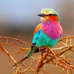 Gorgeous bird