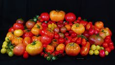 How to Grow Heirloom Tomatoes from Seed @Garden Delights.