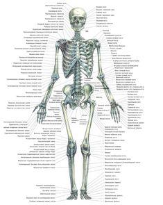 skeleton-bone-name-human-skeleton-diagram-with-name-of