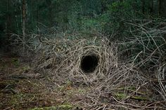 woodland dwellings by ellie davies cool camps! Fontainebleau, Living Off The Land, Forest Floor, Environmental Art, Bushcraft, Faeries, Woodland, Creepy, Nature