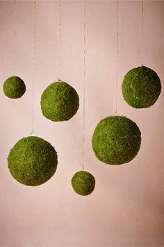 Moss Spheres from BHLDN hang from trees, tent. place on vases, use as centerpieces