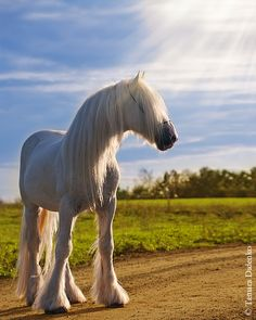 ☀A beautiful white horse by Tamara Didenko :)