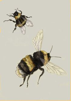 Bee ~ Wildlife Art by Ben Rothery, via Behance
