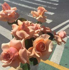 Rosas rosa sobre el asfalto...