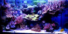Get your corals to grow crazy with this light modification. Coral Reef Aquarium, Saltwater Aquarium Fish, Saltwater Tank, Marine Aquarium, Planted Aquarium, Freshwater Aquarium, Marine Fish Tanks, Marine Tank, Reef Aquascaping