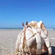 Aesthetic Videos of the Ocean Creatures – albino animal N Animals, Animals Photos, Rare Albino Animals, Nature Gif, Nature Videos, Light Well, Urban Setting, Ocean Creatures, Aesthetic Videos