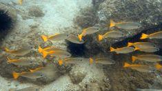 Seaspiracy – wie der Mensch die Meere zerstört Pets, Animals, Seafood Market, Microorganisms, Animales, Animaux, Animal, Animais, Animals And Pets
