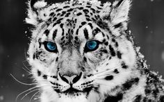 ci si perde in questi occhi blu...<3