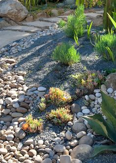 Gardening with Rocks & Gravel and Dry Conditions. Gardens. Gardening. Landscaping. Grace Design Associates Inc.