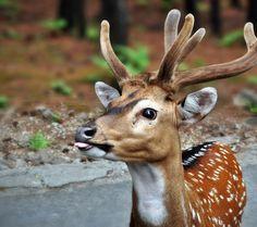 Beautiful Fellow Deer