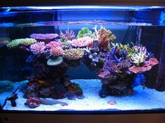 Tips for awesome aquascapes Saltwater Aquarium Advice Hello! Here we have best photo about saltwater aquarium aquascape. Saltwater Aquarium Setup, Coral Reef Aquarium, Saltwater Fish Tanks, Aquarium Design, Marine Aquarium, Aquarium Fish Tank, Marine Fish Tanks, Marine Tank, Nano Reef Tank