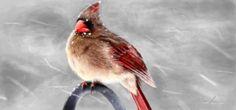 prety drawn bird