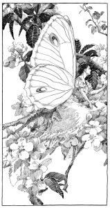vintage clipart butterfly, printable fairy graphics, digital fairy image, free black and white clip art, antique angel butterfly illustration Butterfly Fairy, Vintage Butterfly, Butterfly Kisses, Butterfly Illustration, Illustration Art, Illustrations, Image Beautiful, Fairy Coloring Pages, Vintage Fairies