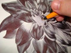 by Paul Alexander Thornton, via Behance Ink Pen Drawings, Flower Drawings, Biro Art, Watercolor Mixing, Watercolour, Draw On Photos, Arts Award, Natural Forms, Ballpoint Pen