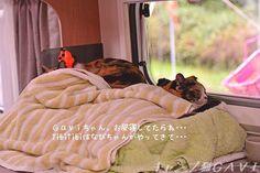 里親さんブログキャンプのお昼寝ね・・・何だか、何だかGaviちゃんね・・・ - http://iyaiya.jp/cat/archives/81223